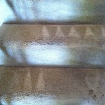 Alameda-Stairs-Carpet-Cleaning