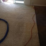 Alameda-Traffic-Area-carpet-cleaners
