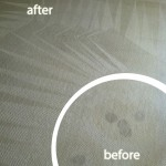 Alameda-Wine-Stain-Carpet-Cleaning