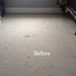 Bedroom-Wall-to-Wall-Carpet-Cleaning-Alameda-A